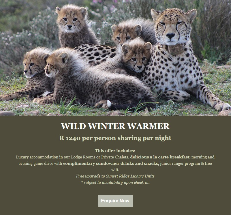 Wild Winter Warmer